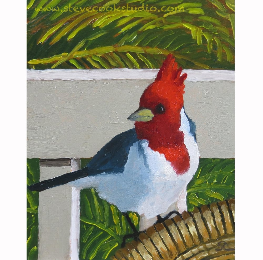 """Lanai Breakfast Guest"" oil on panel 8 x 10"