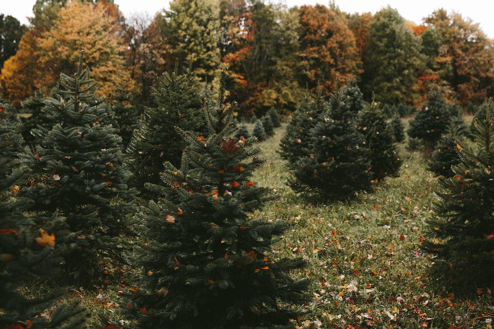peninsula-ohio-family-portraits-heritage-tree-farm-cuyahoga-valley-national-park-5.jpg