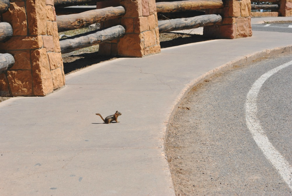 Bryce Canyon (23).jpg