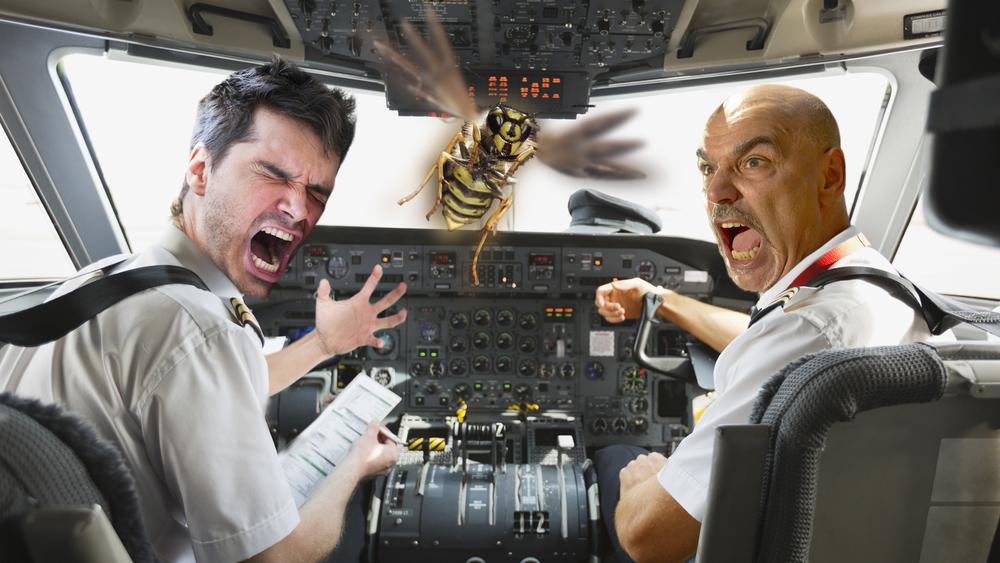 wasp_cockpit.jpg