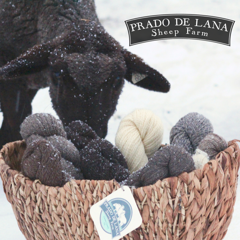 Prado de Lana   From Sheep to stitch - our flock of Romney, Lincoln Longwool, and CVM/Romeldale sheep provides us with one of a kind, robust yarns and other pure breed wool products. We are ecstatic to introduce them to EYF 2018!