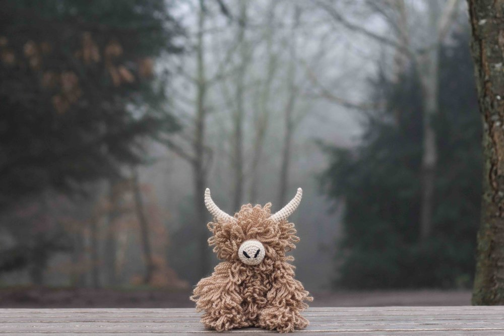 Morag_the_highland_coo_lifestyle_fog copy.jpg