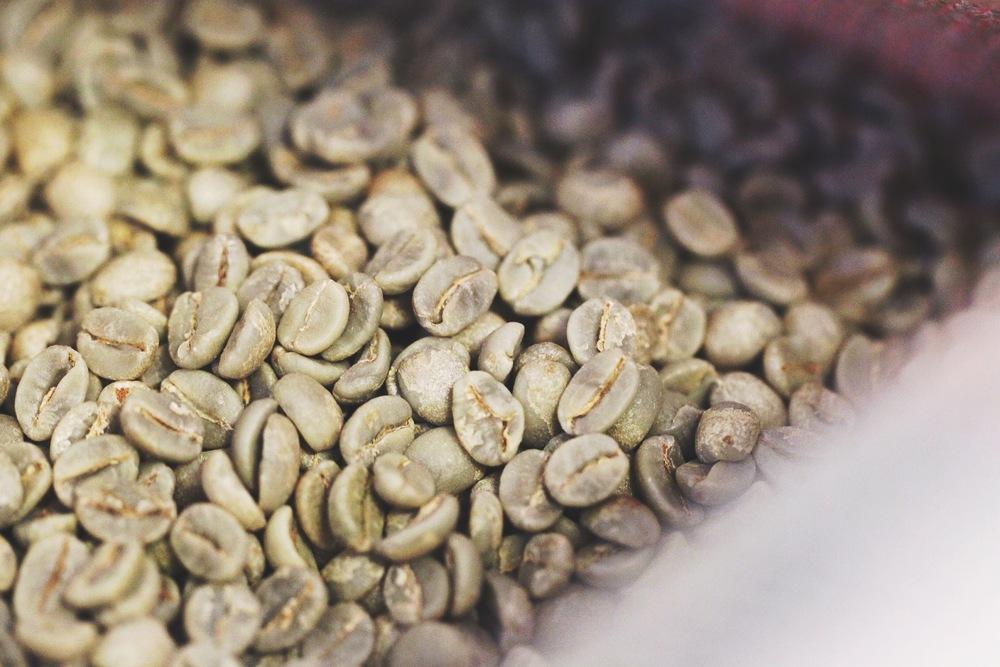 Coffee beans pre roasting.