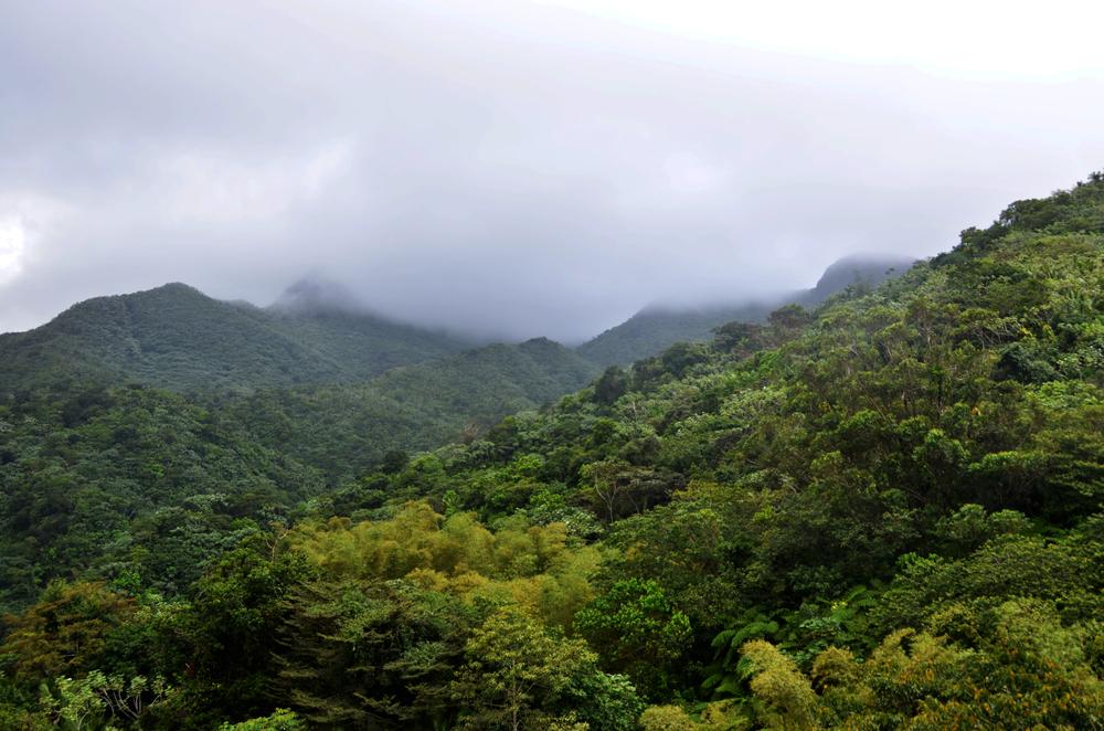 El Yunque National Rainforest, Puerto Rico