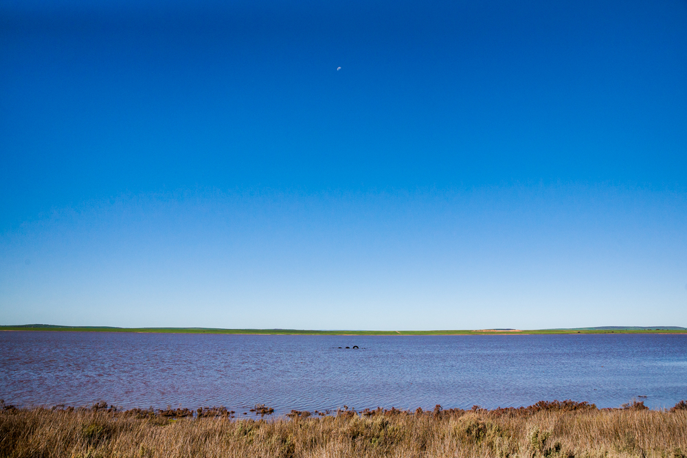 South-Australia-Simpson-6.jpg