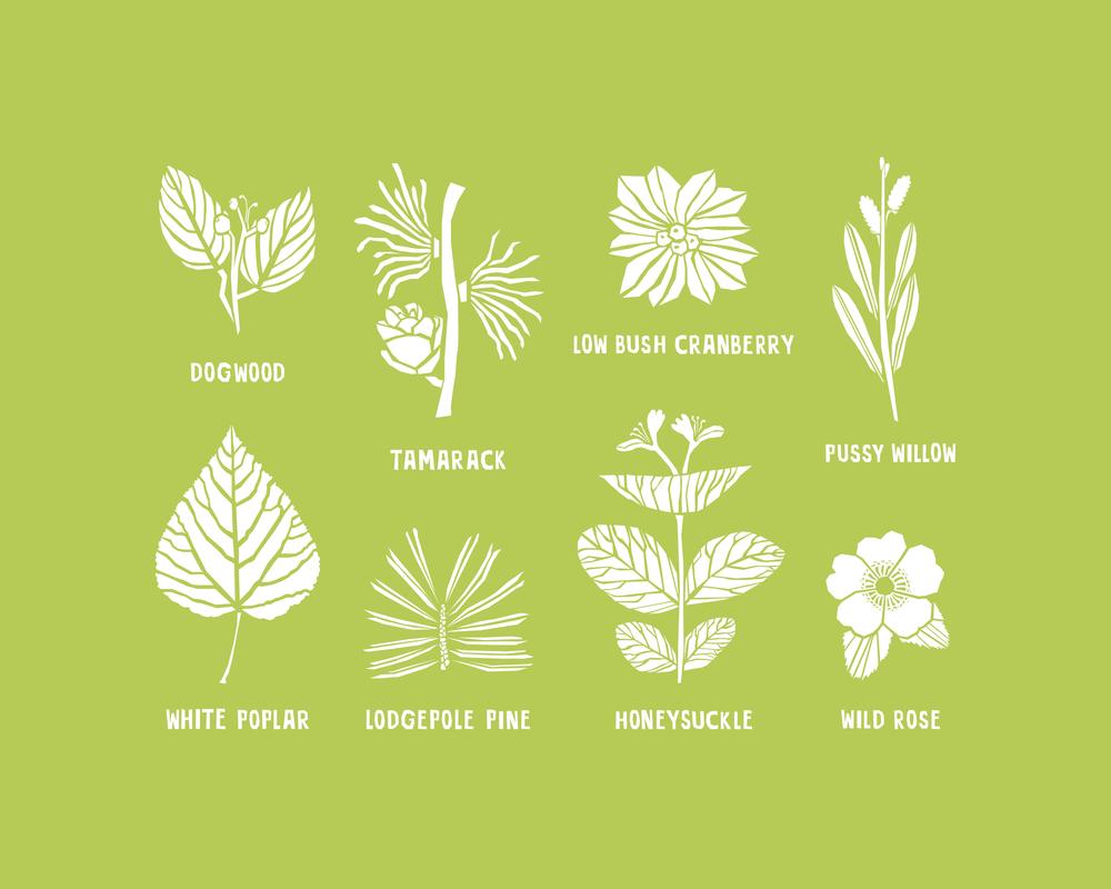 8x10 - Plants - Green-13.jpg