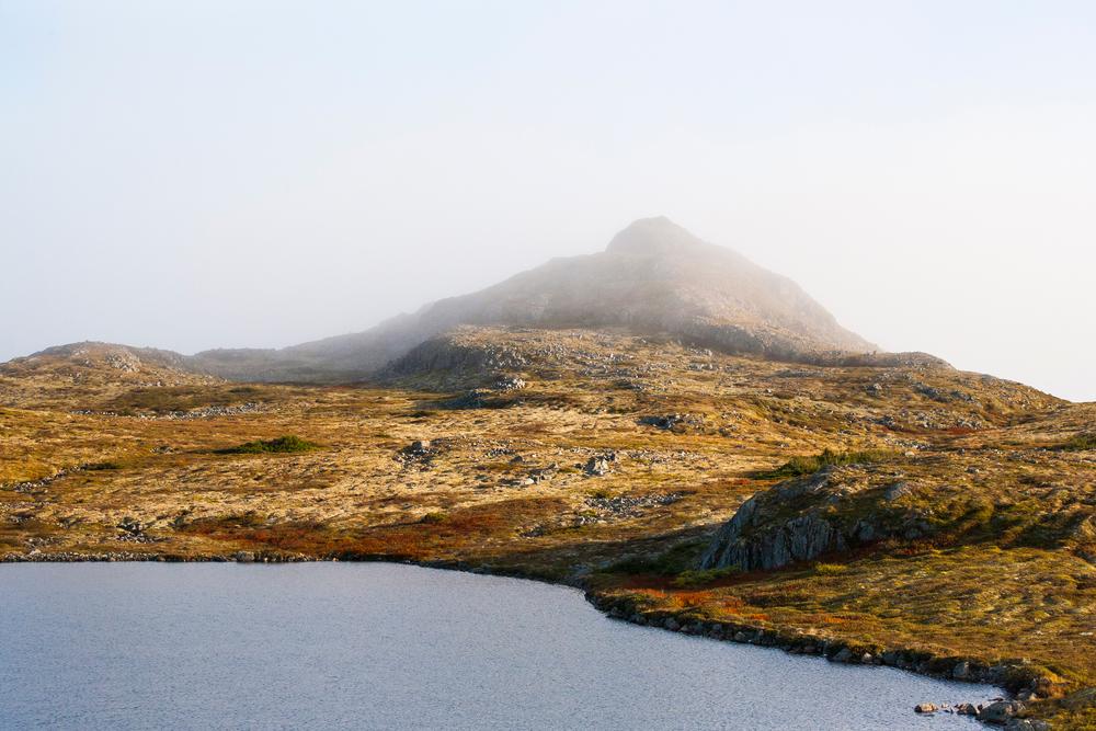 Simpson-Newfoundland.jpg