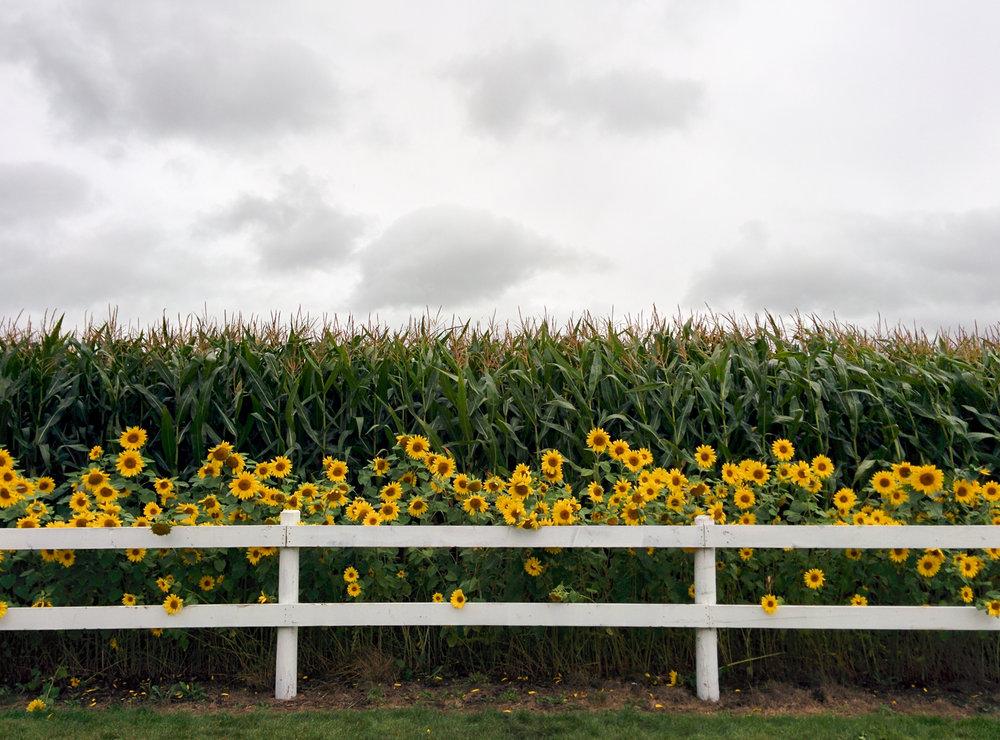 corn-maze-3.jpg