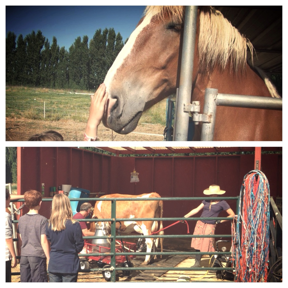 The campers learned how milking machine functions and met Lorraine's beautiful horse, Stella.