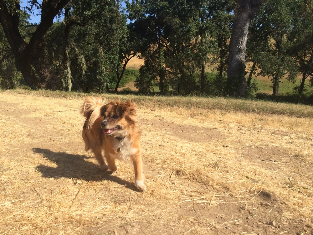 Dashel, Kate's lovable dog, running around the ranch.