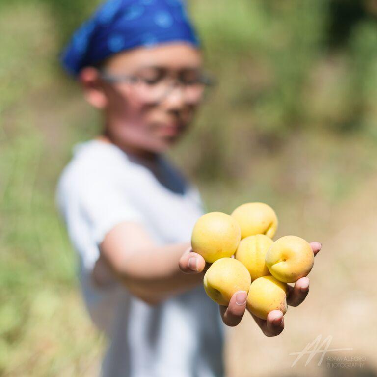 S1D4 2015 daniel apricot.jpg
