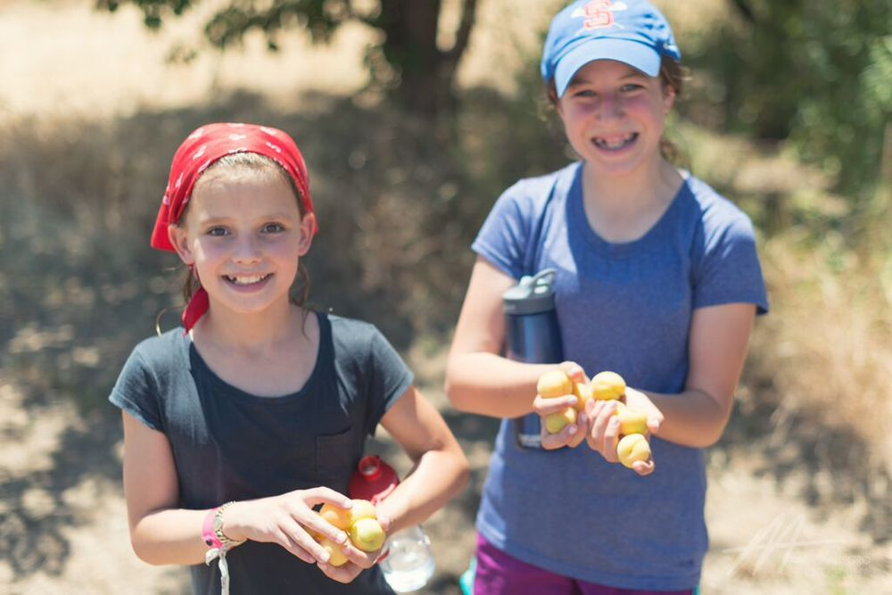 S1D4 2015 girls apricots.jpg