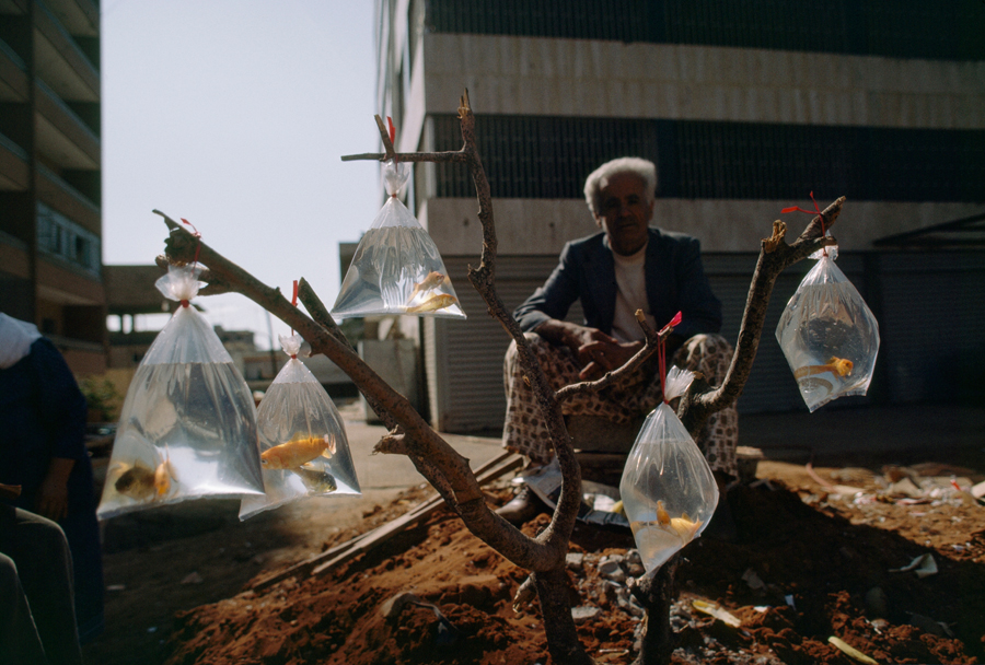 A man sells goldfish in baggies tied to a tree branch in Beirut, Lebanon, February 1983
