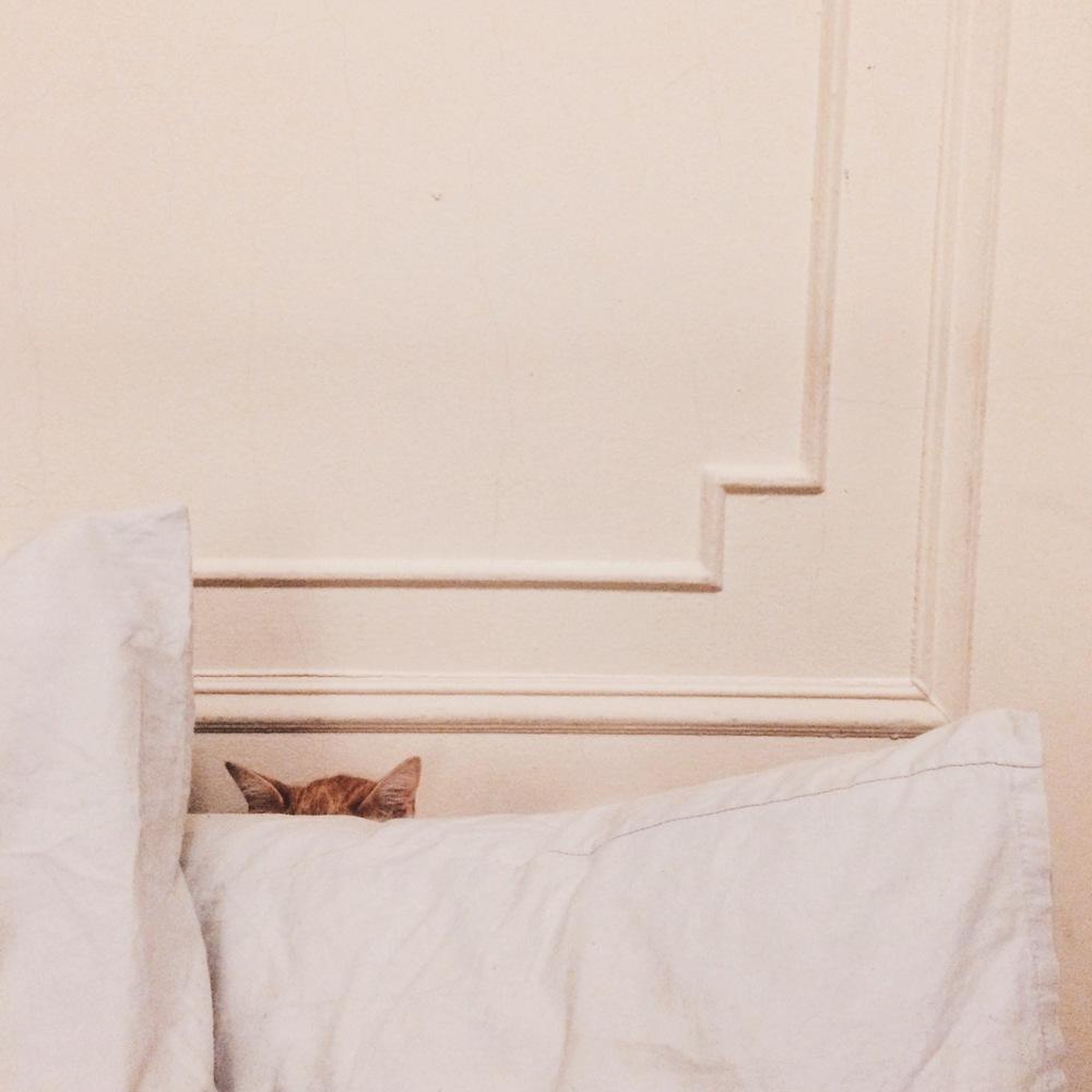 He always hiding in his pillow fort.