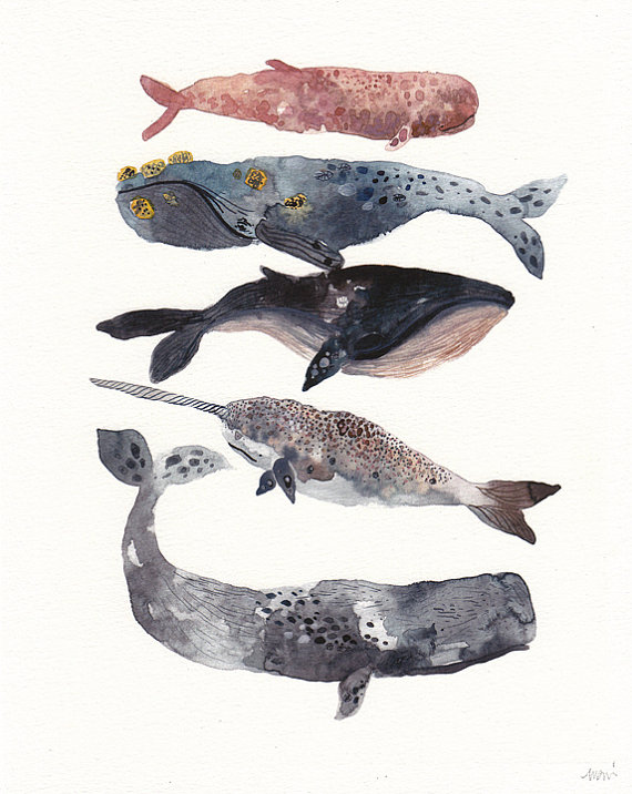 Five Whales - $25