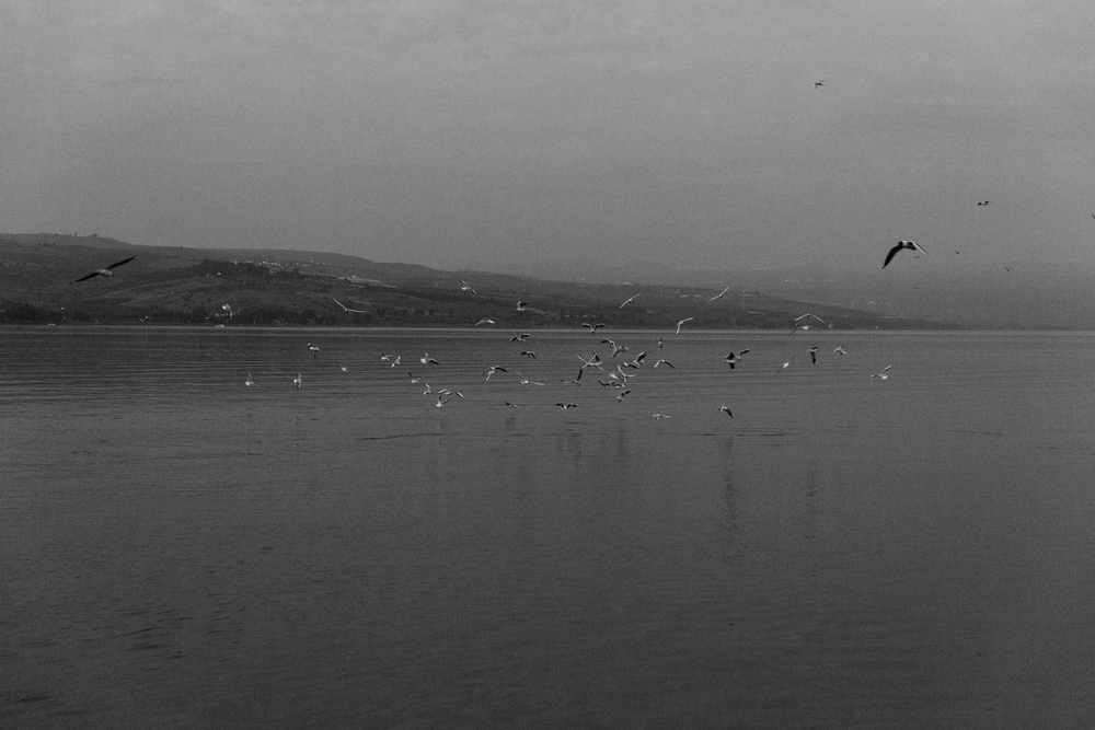 sea of galilee, israel.   israel collective