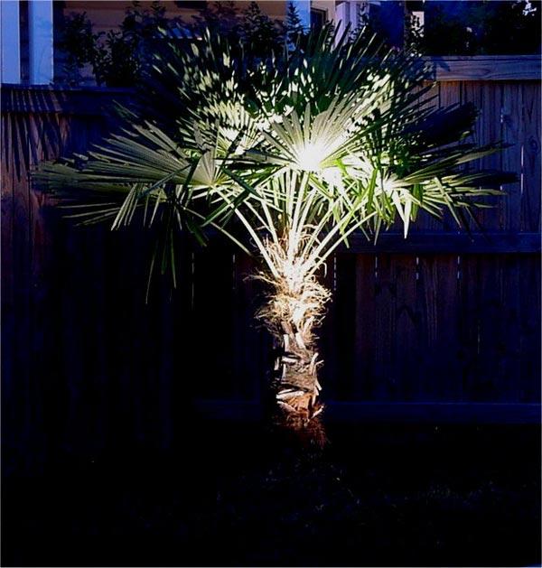 Henry-Palm.jpg