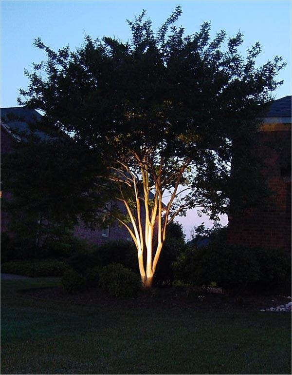 Byrum-Treefront.jpg
