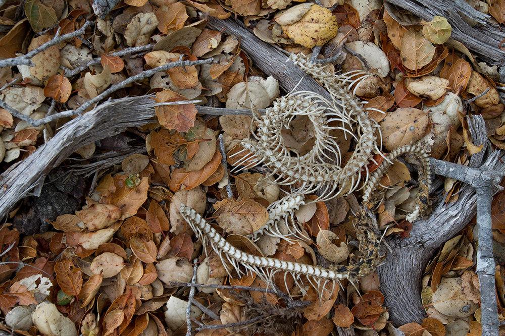 snakebones.jpg