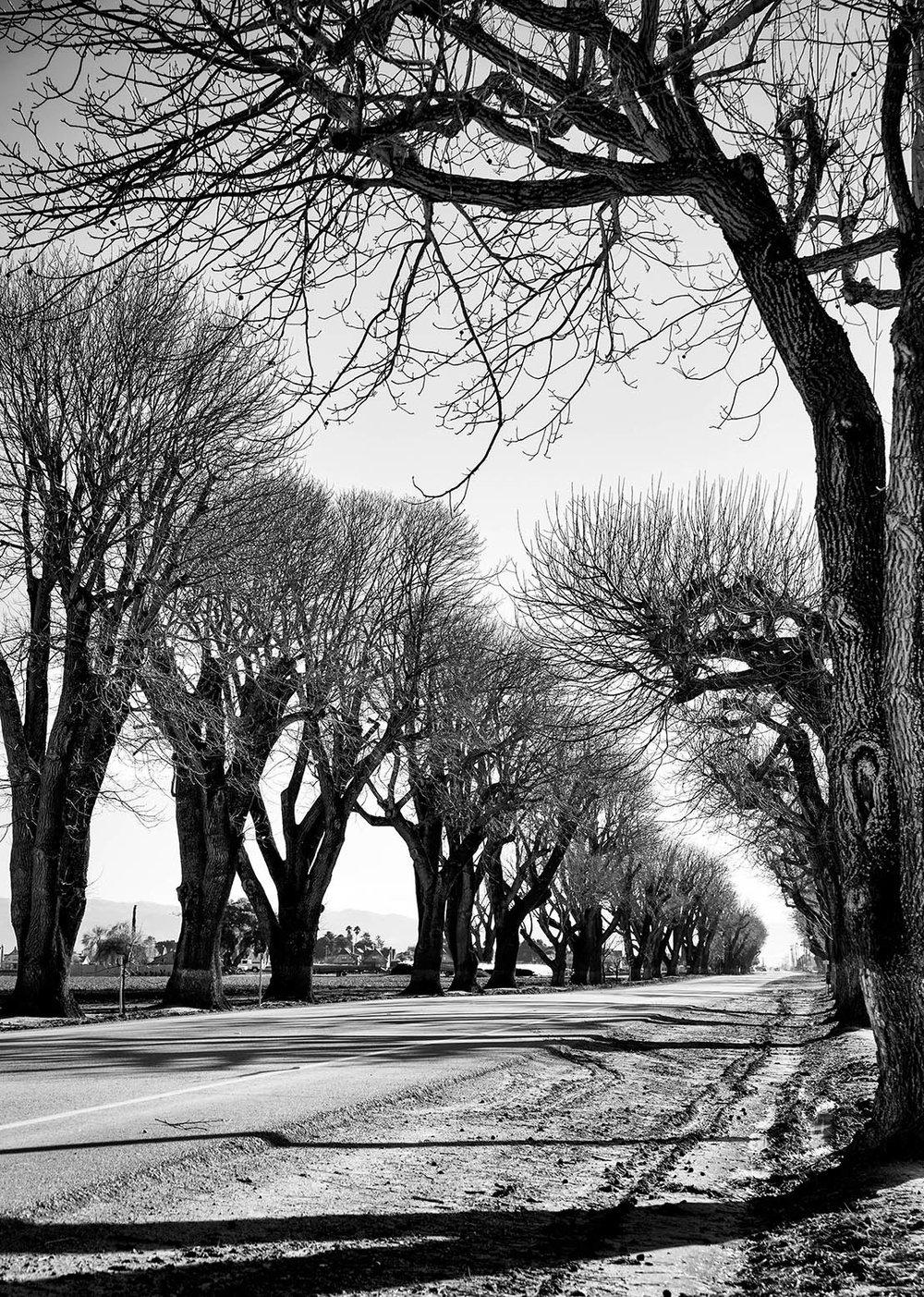 spreckletrees.jpg