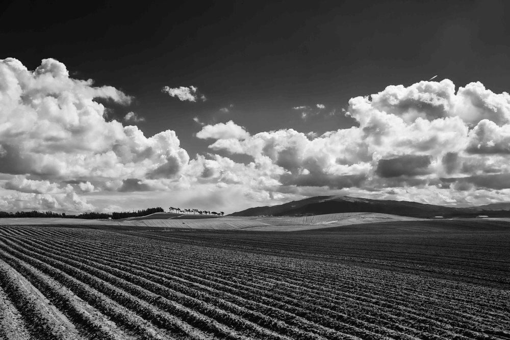 farmland2 copy.jpg