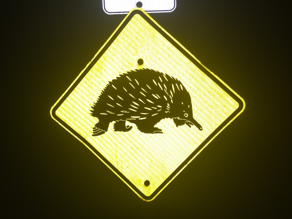 There are so many random wildlife signs! What the heck is this??