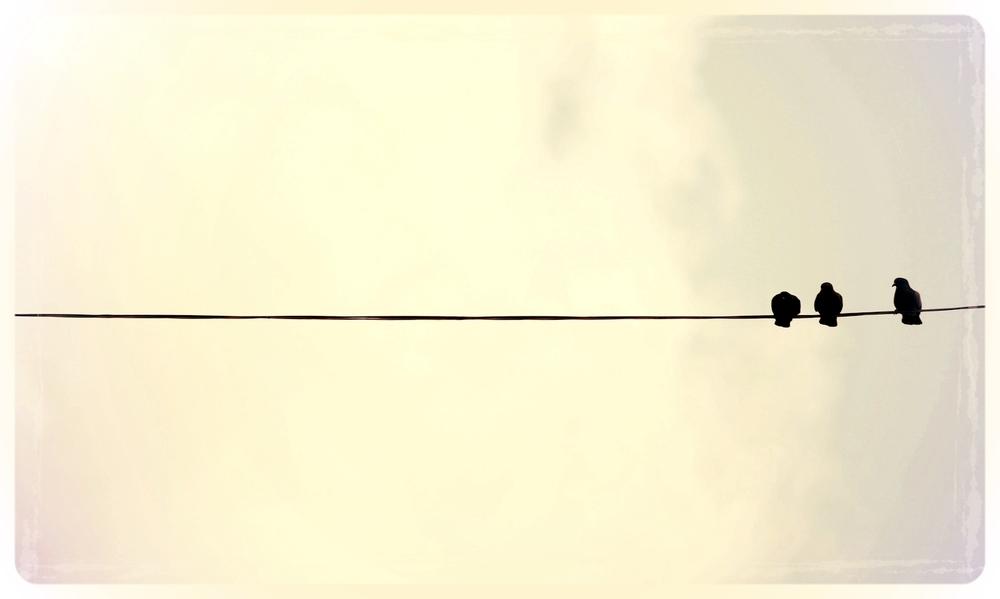 imac_pigeons-wallpaper-1920x1200.jpg