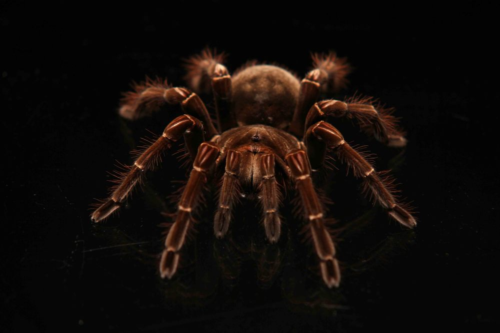 THE REEL OF HORROR - BIG SPIDER.jpg