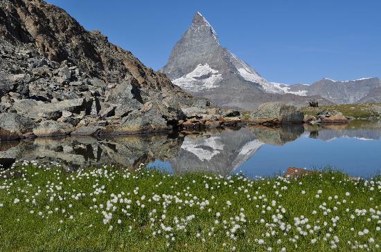 edelweiss-and-matterhorn.jpg