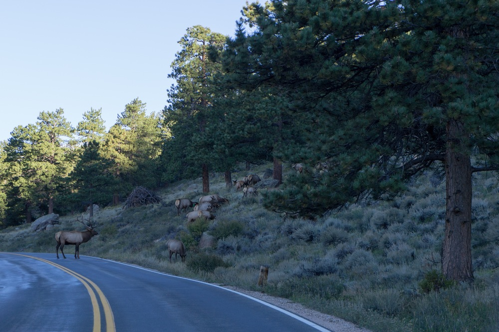 Elk Rut 2013 Edits - 05.jpg