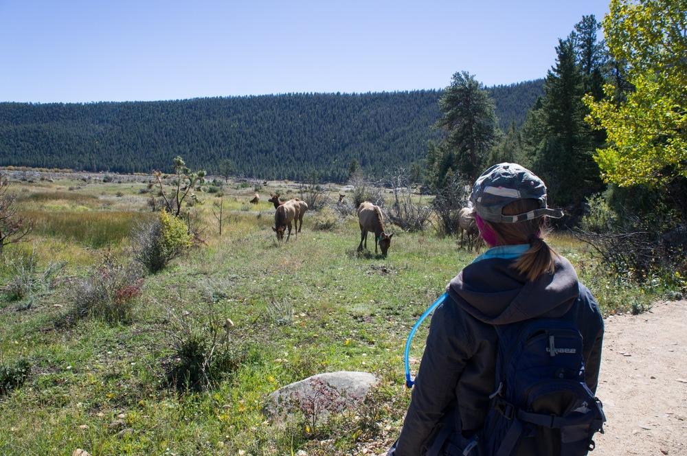 Elk Rut 2013 Edits - 52.jpg