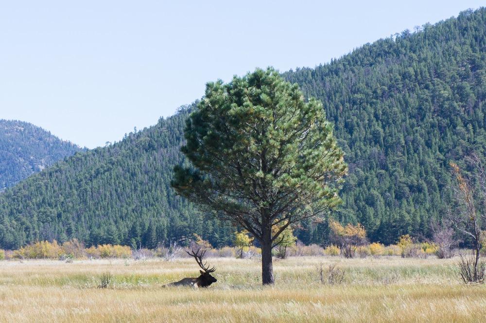 Elk Rut 2013 Edits - 50.jpg