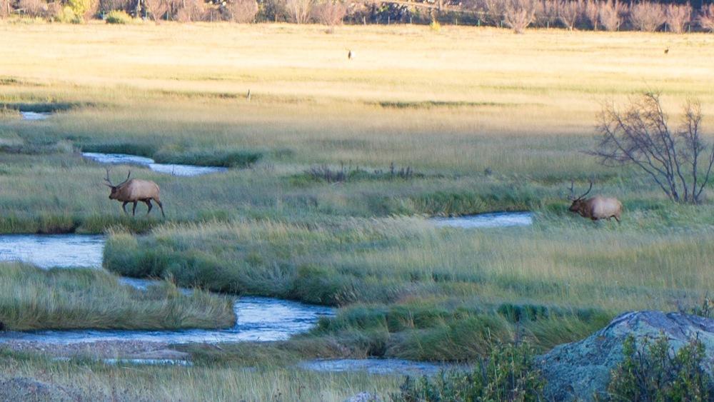 Elk Rut 2013 Edits - 71.jpg