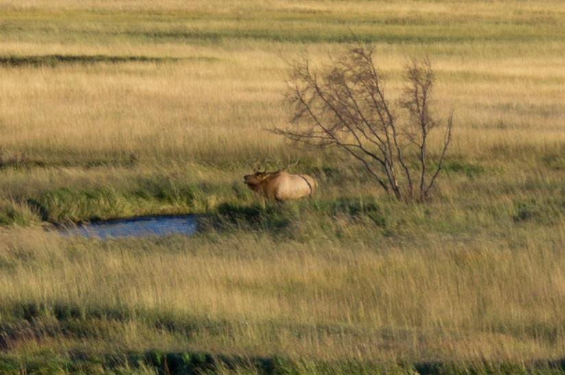 Elk Rut 2013 Edits - 69.jpg