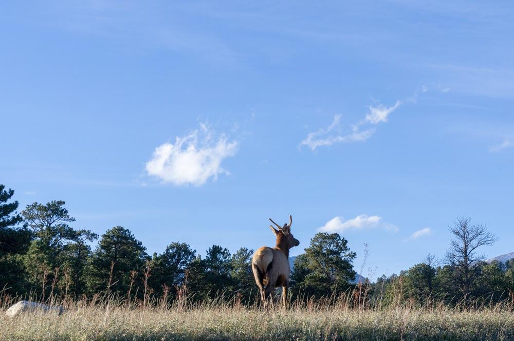 Elk Rut 2013 Edits - 62.jpg
