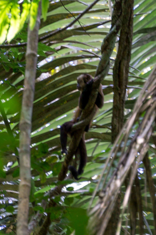 Peru2-29.jpg