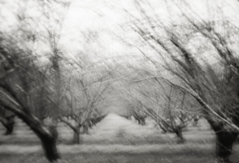 landscapesportfolio2.jpg
