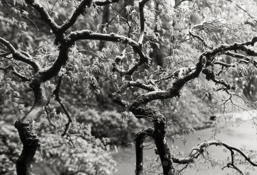 landscapesportfolio59.jpg