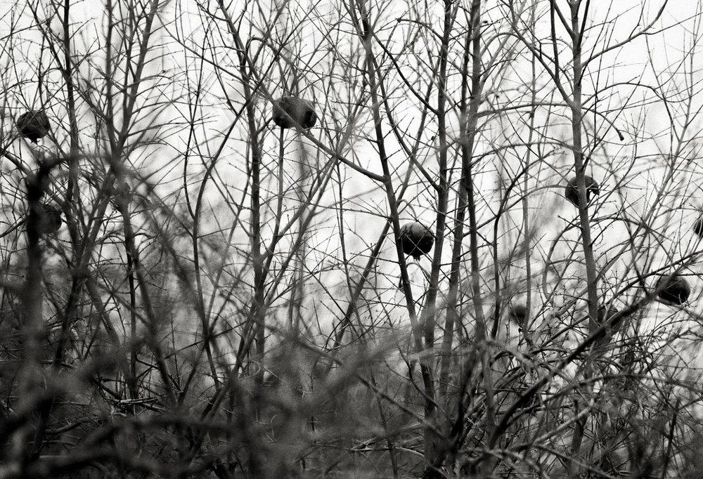 landscapesportfolio64.jpg
