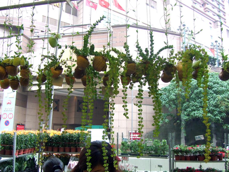 Copy of flowermarket11_61.jpg