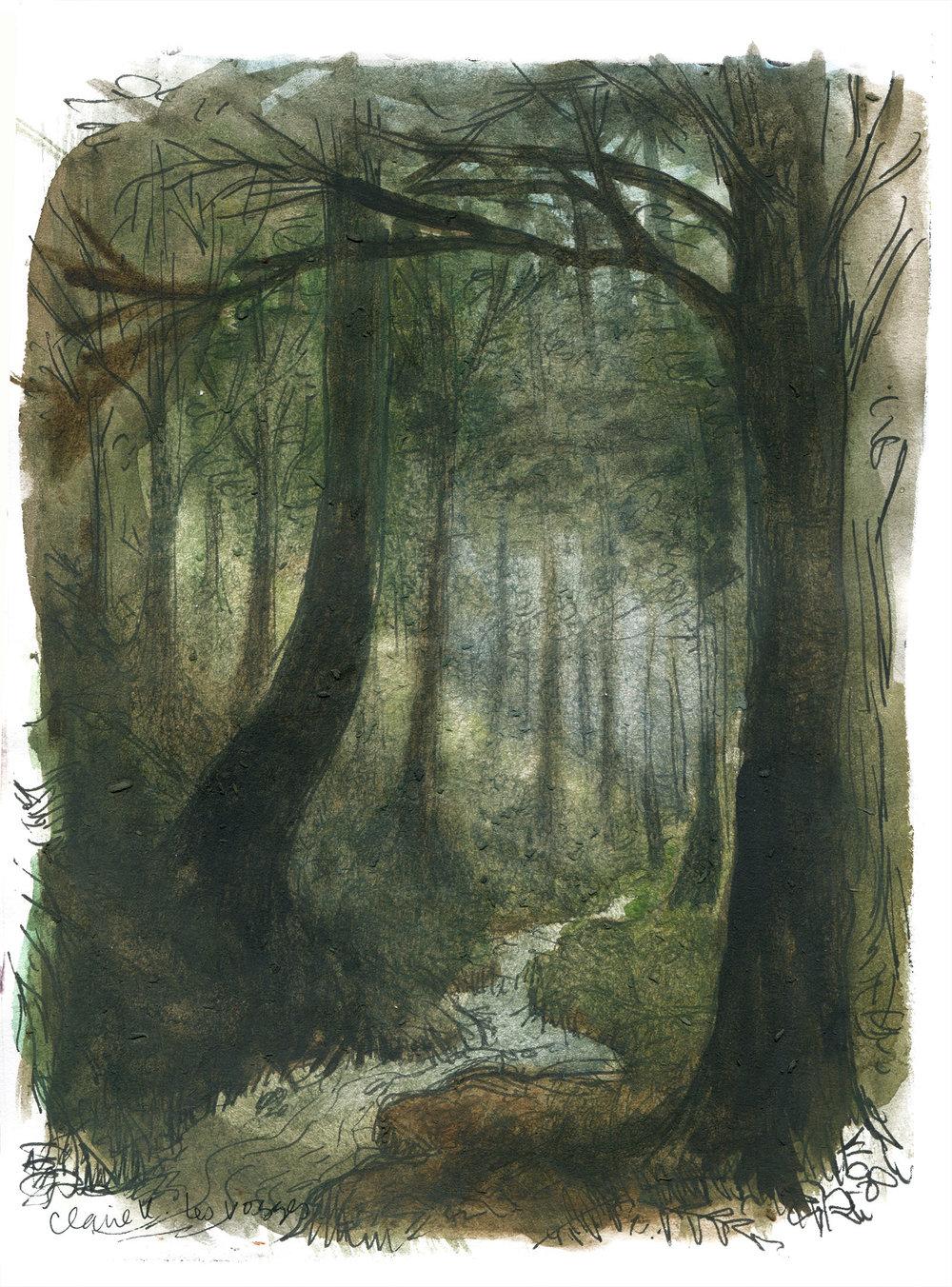 les vosges forest.jpg