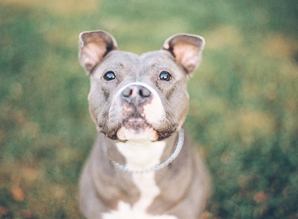 Vicki Grafton Photography Film dog portraits-001-2.jpg