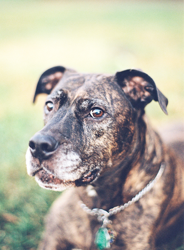 Vicki Grafton Photography Film dog portraits-001.jpg