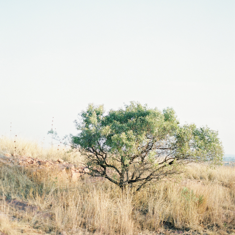 Vicki Grafton Photography South Africa Film Wedding Photographer -3.jpg
