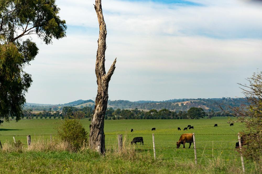 Drive  Yarra Valley -Melbourne, Australia
