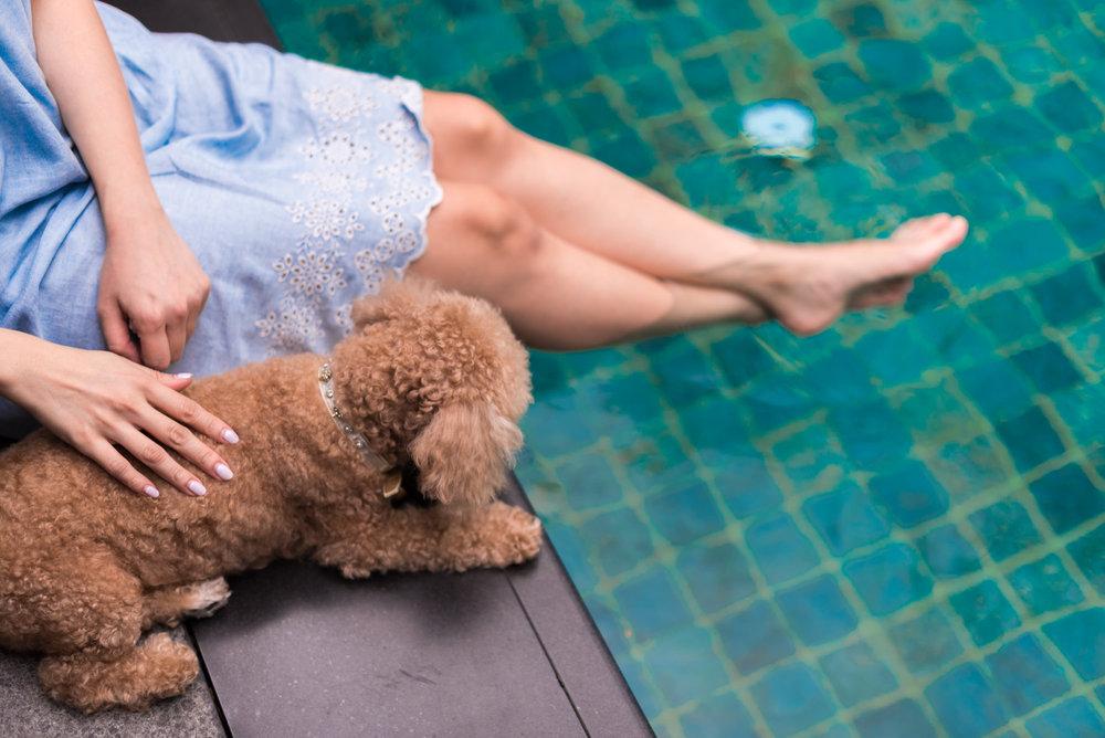 Pet-friendly Hotel  Two-Bedroom Garden Villa - Capella Singapore