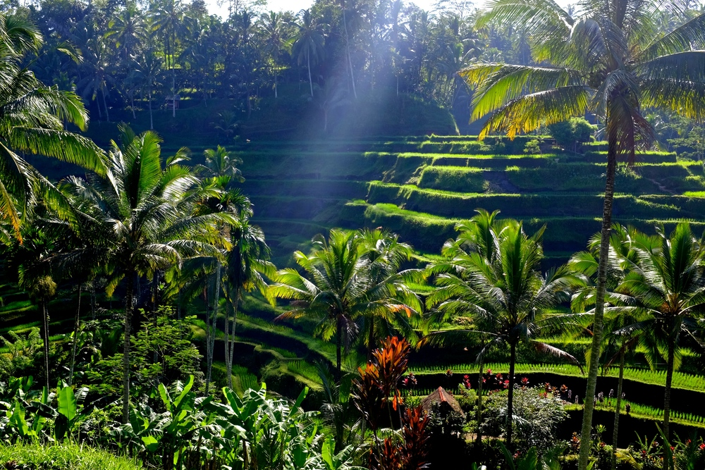 Tegalalang Rice Terraces, Ubud