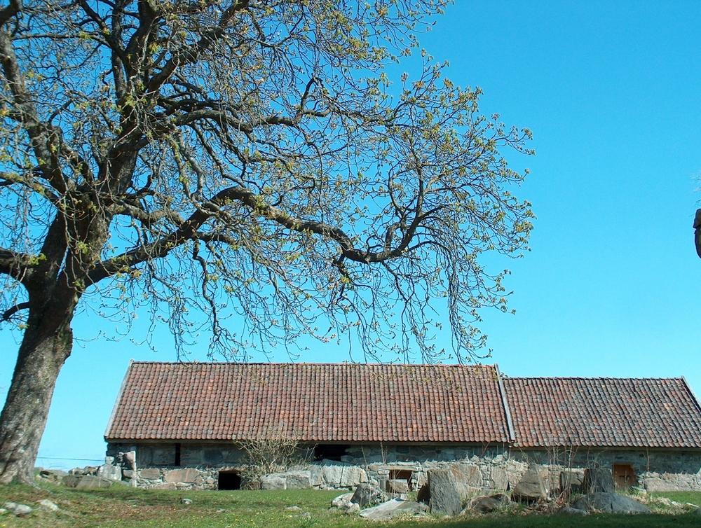 Halsnøy monastery