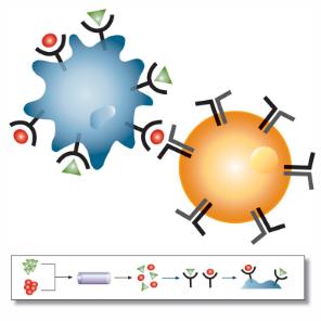 immunology.jpg