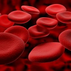 red-blood-cells.jpg